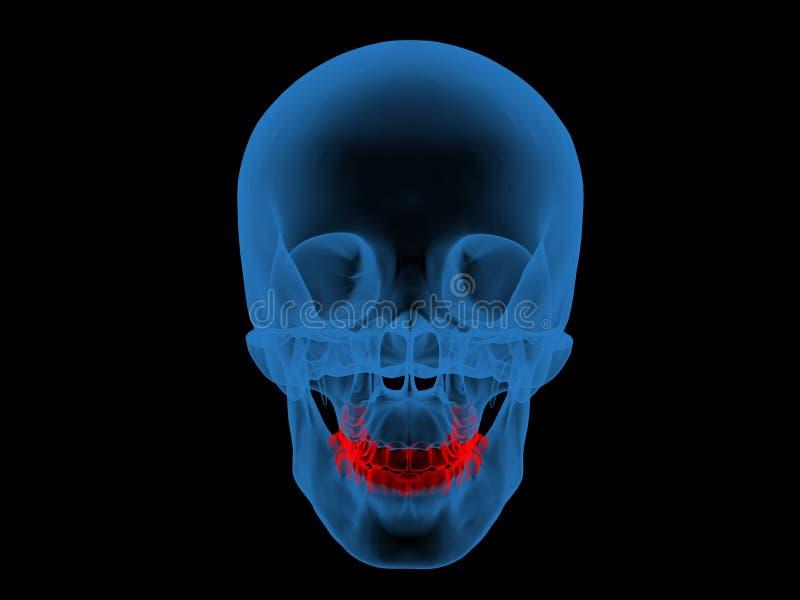 зубоврачебный луч jpg x стоковая фотография rf