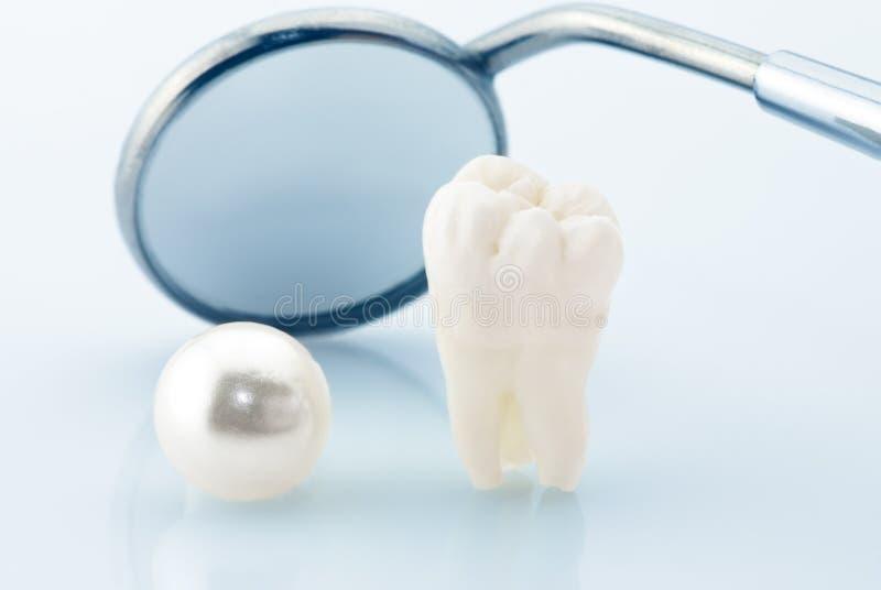 зубы принципиальной схемы здоровые стоковая фотография rf