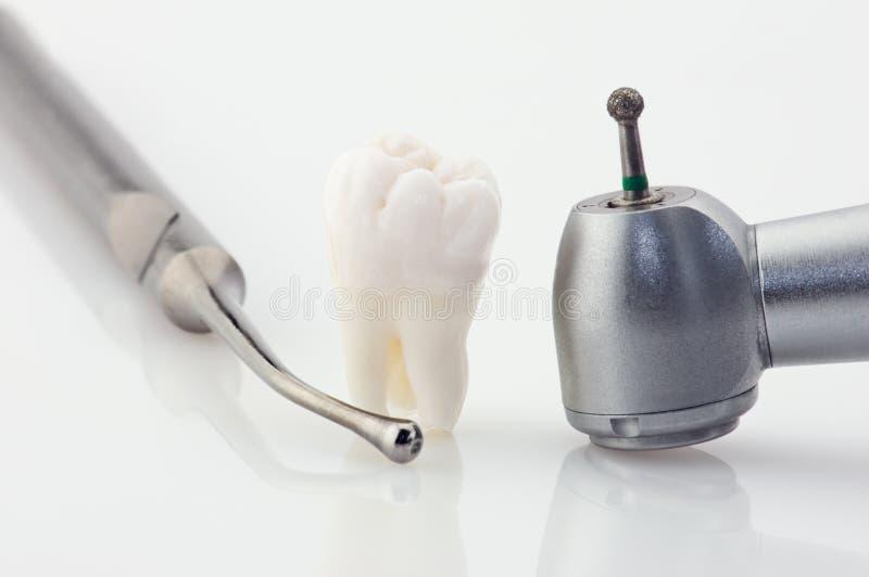 зубы принципиальной схемы здоровые стоковые изображения rf