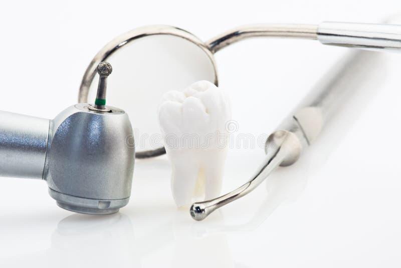 зубы принципиальной схемы здоровые стоковое фото