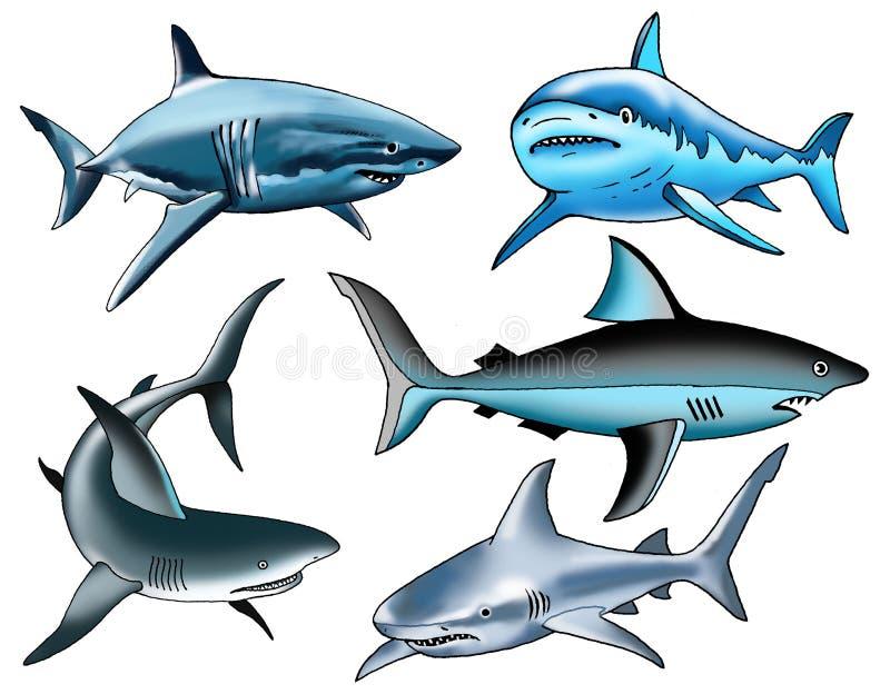 Зубы ребра рыб акулы хрящеватые иллюстрация штока