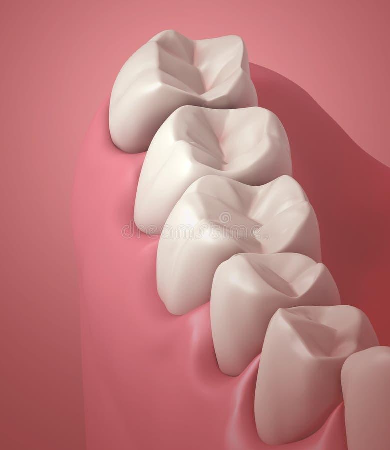 зубы 3D или поднимающее вверх зуба близкое стоковая фотография rf