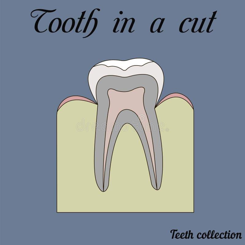 Зуб в отрезке иллюстрация вектора