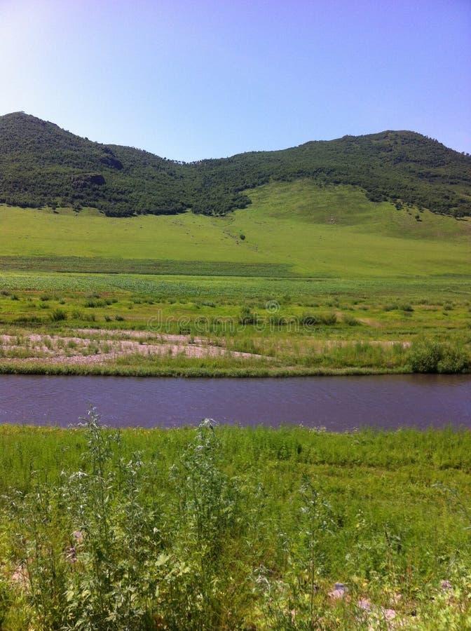 Злаковик Внутренняя Монголия стоковое изображение