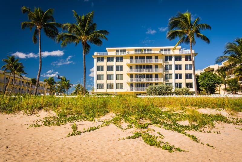Здание и пальмы вдоль пляжа в Palm Beach, Флориде стоковое фото