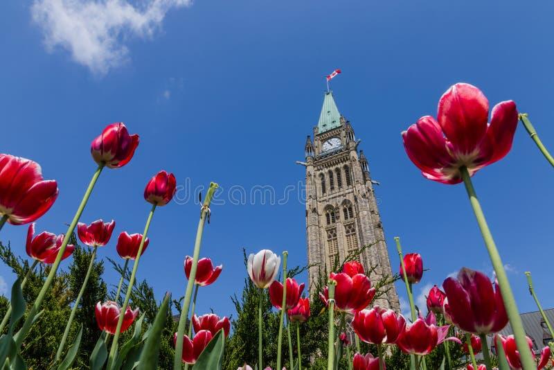 Здание парламента в Оттаве Канаде стоковая фотография rf
