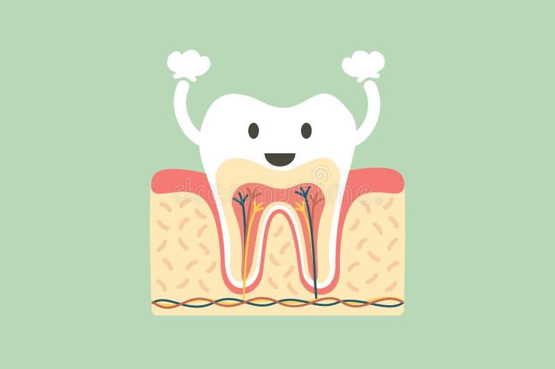 Здоровая анатомия зуба потеха иллюстрация штока