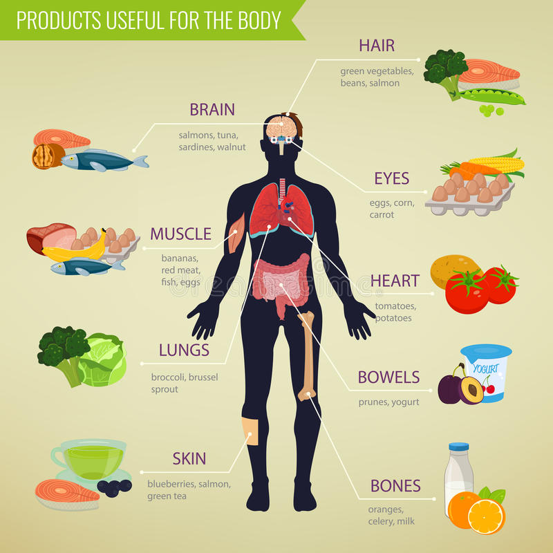 Здоровая еда для человеческого тела Здоровая еда Infographic Еда и питье вектор иллюстрация штока