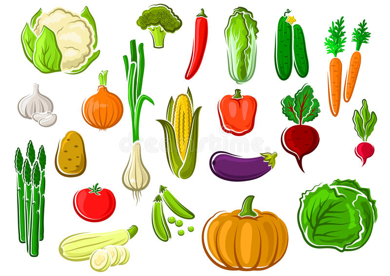 Здоровые свежие зрелые изолированные овощи фермы иллюстрация вектора
