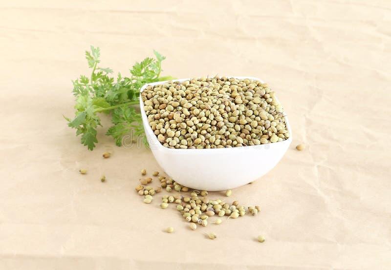 Здоровые семена кориандра еды в шаре стоковые фото