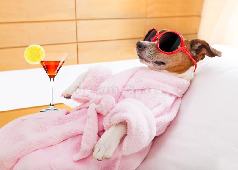 Здоровье курорта собаки стоковые изображения