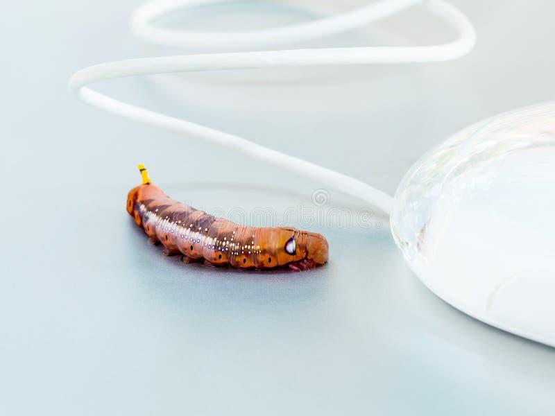Злостый червь компьютера стоковые изображения