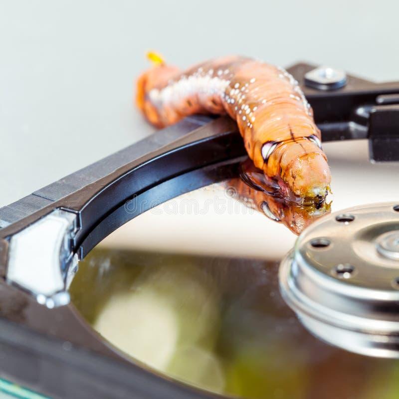Злостый червь компьютера стоковое фото rf