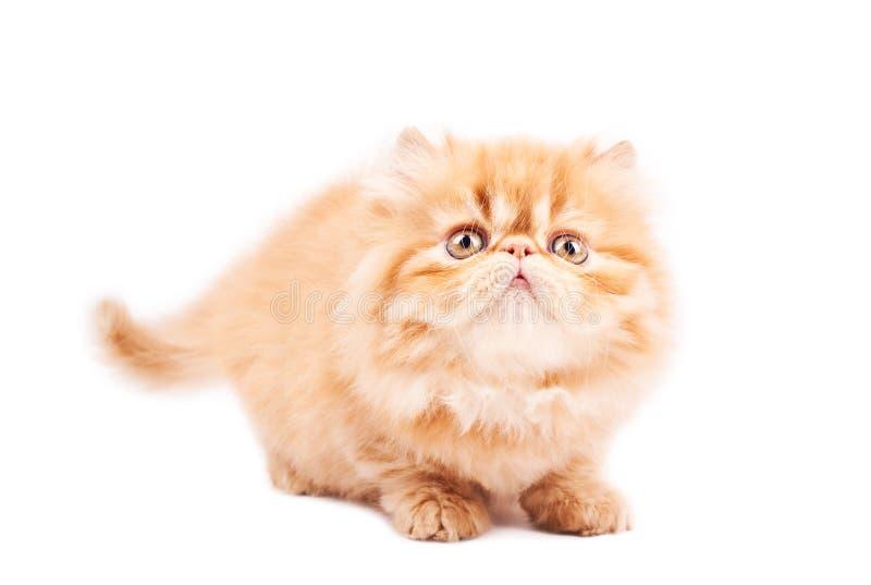 играть кота стоковые изображения rf