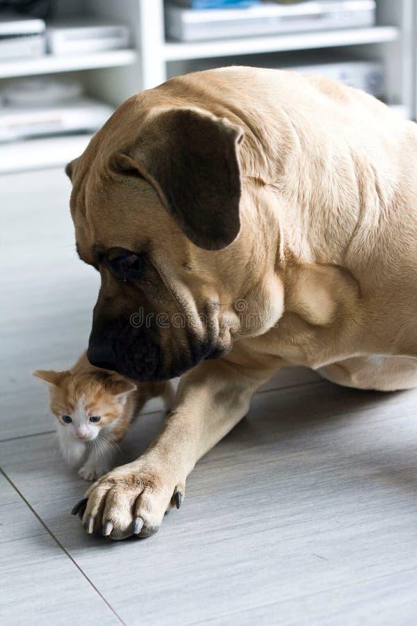 играть котенка собаки стоковая фотография