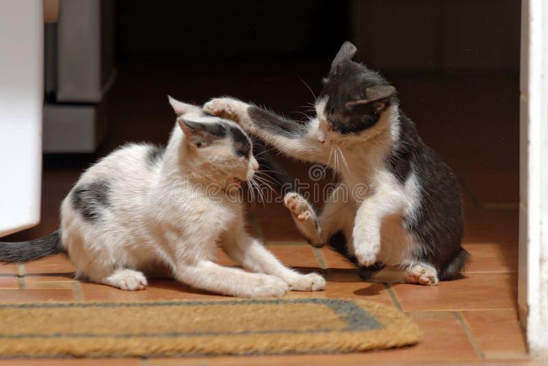 Играть котят стоковая фотография