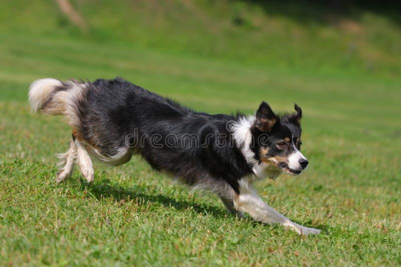 играть летания собаки диска стоковое фото rf