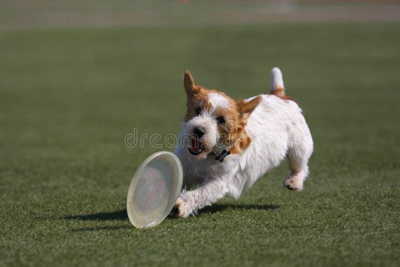 играть летания собаки диска стоковое изображение