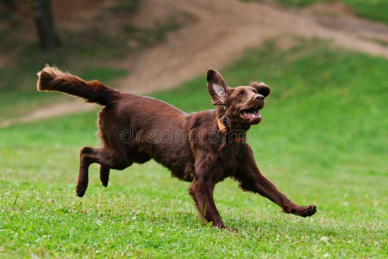играть летания собаки диска стоковые изображения rf