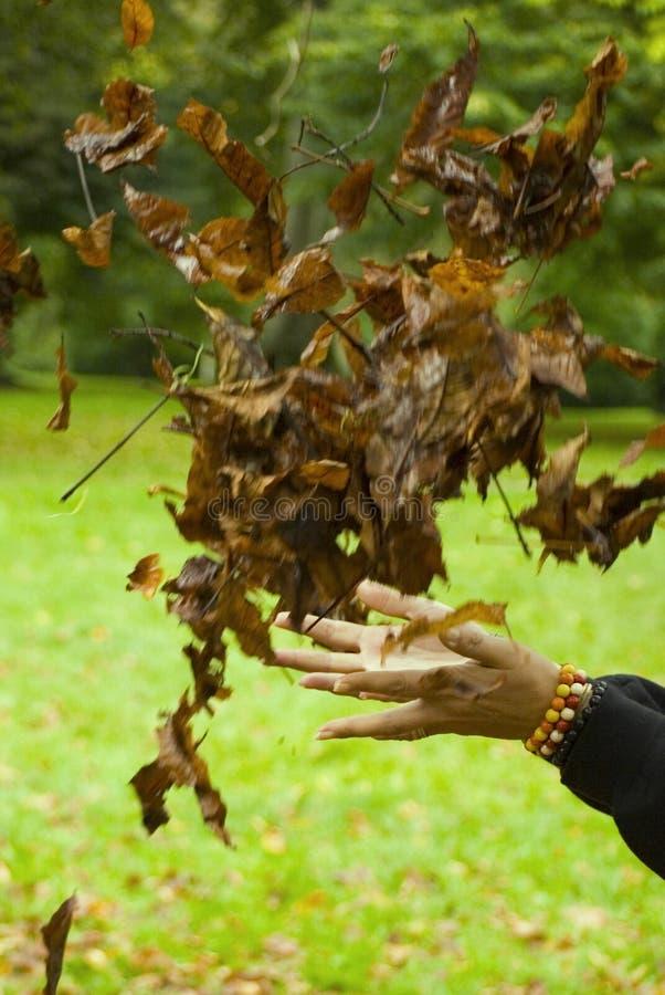 играть листьев стоковое изображение rf