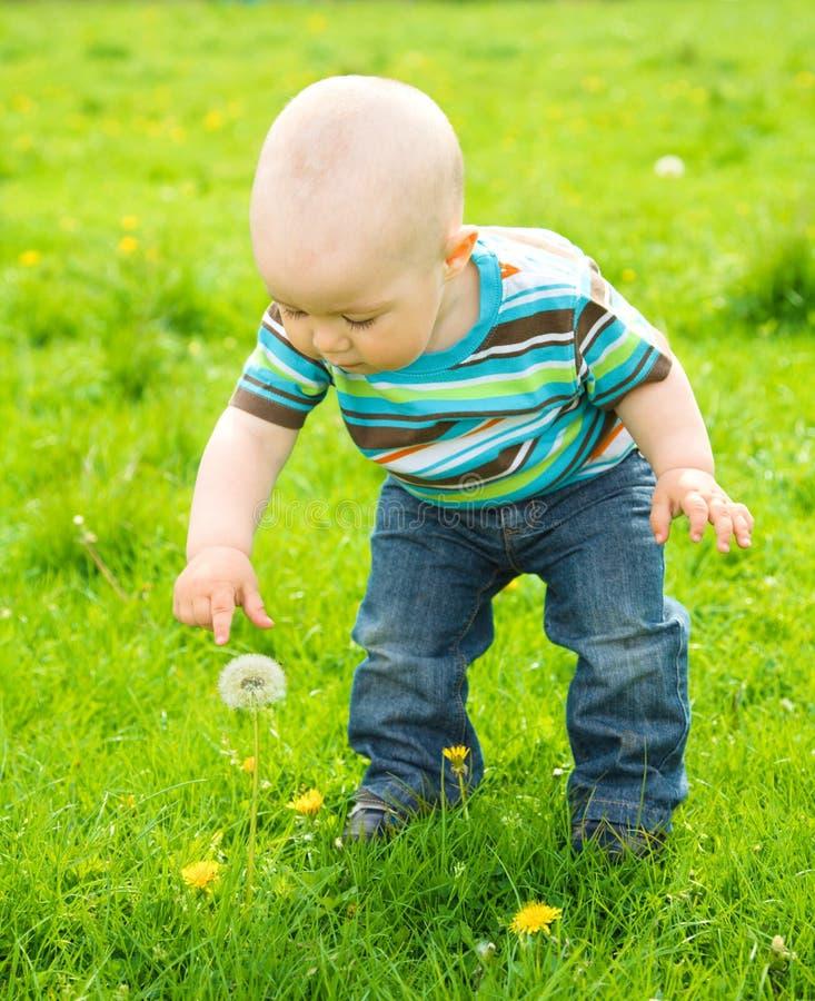 играть лужка мальчика зеленый маленький стоковое фото rf