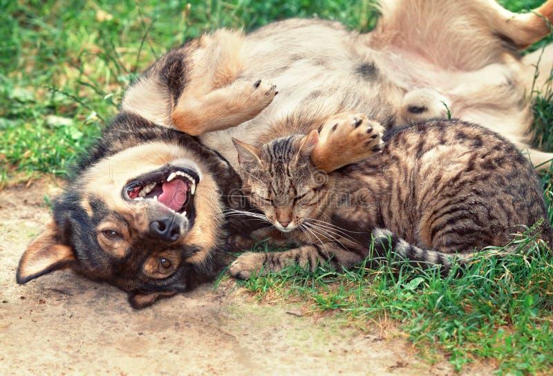 Играть собаки и кошки внешний стоковая фотография rf