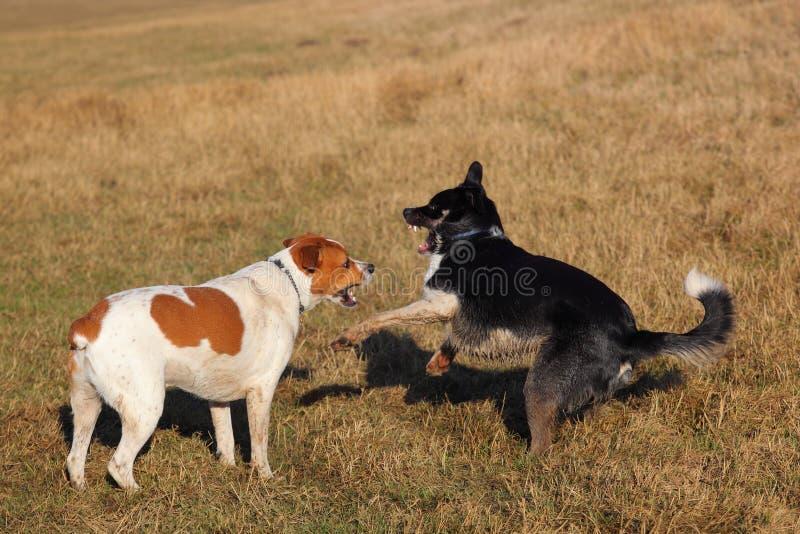 Download играть собак стоковое изображение. изображение насчитывающей canines - 18386927