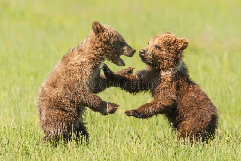 Играть Cubs стоковая фотография rf