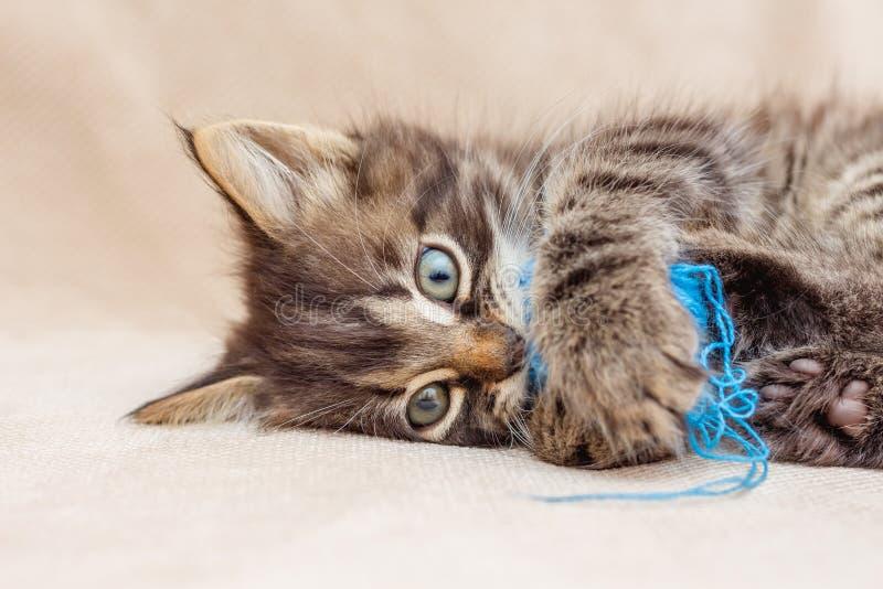 Играют малый striped котенка с шариком голубого threads_ стоковое изображение