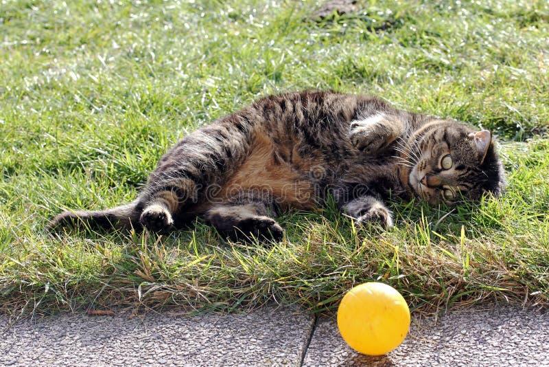 Играя кот стоковая фотография rf