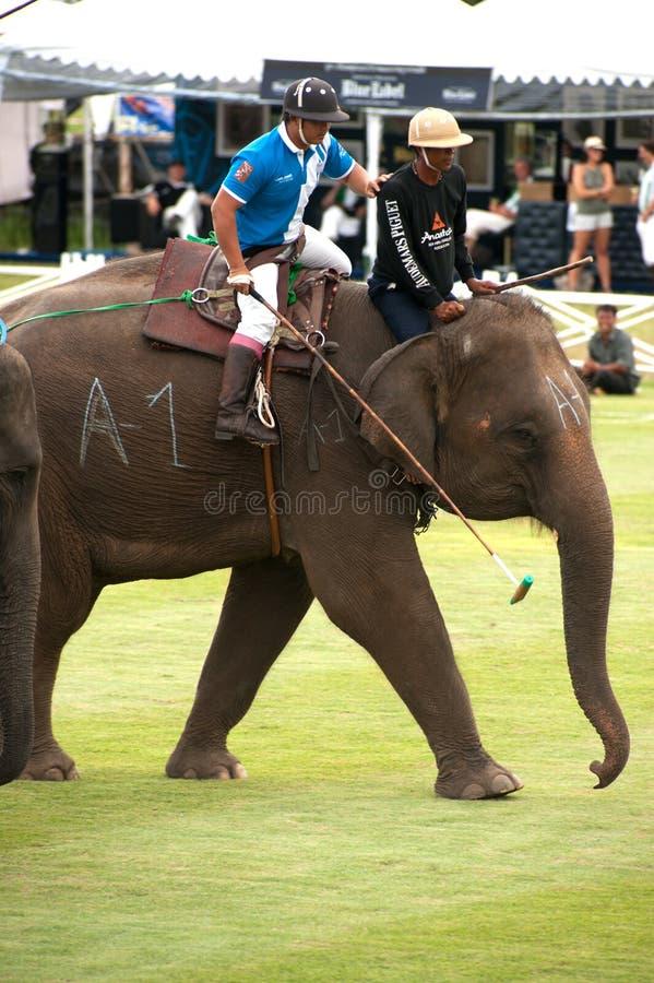 Игра поло слона. стоковое фото