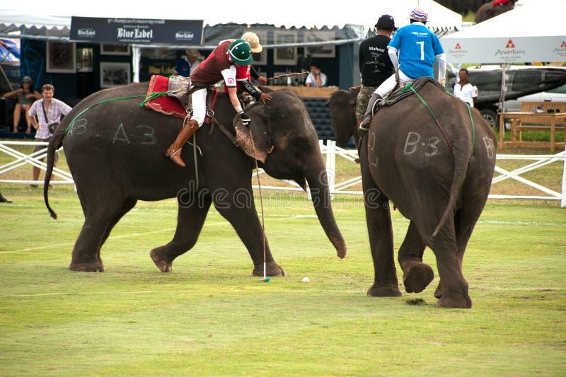 Игра поло слона. стоковая фотография