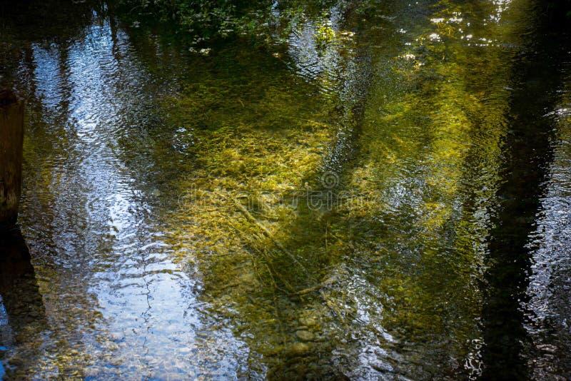 Игра цветов в реке стоковое фото rf
