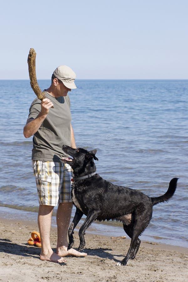 Игра Fetch с собакой стоковые фотографии rf