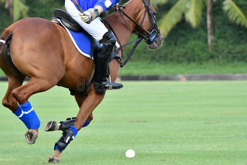 Игрок поло играя лошадь поло во время игр стоковые фото