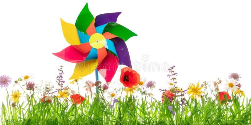 Игрушка ветрянки на красочном луге перед белой предпосылкой стоковое фото rf