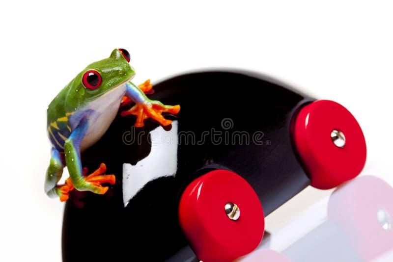 игрушка лягушки стоковое изображение