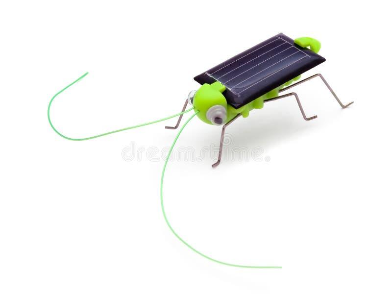 игрушка приведенная в действие кузнечиком солнечная стоковые фото