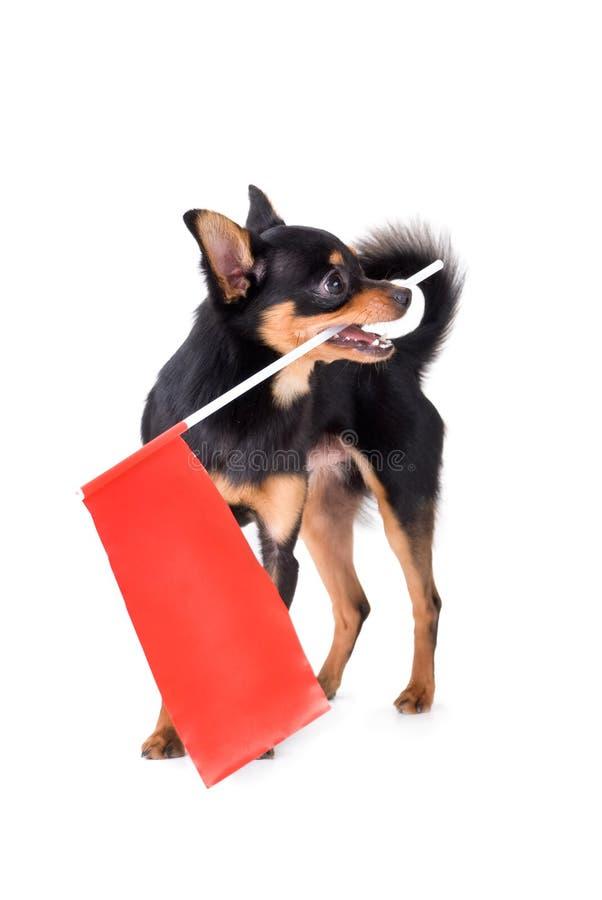 игрушка terrier стоковые изображения