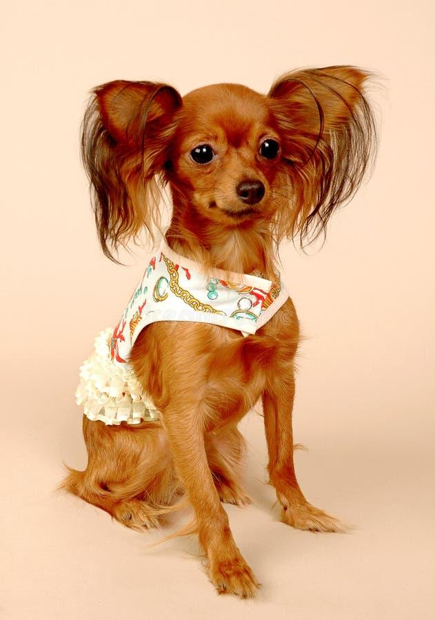 игрушка terrier стоковая фотография rf