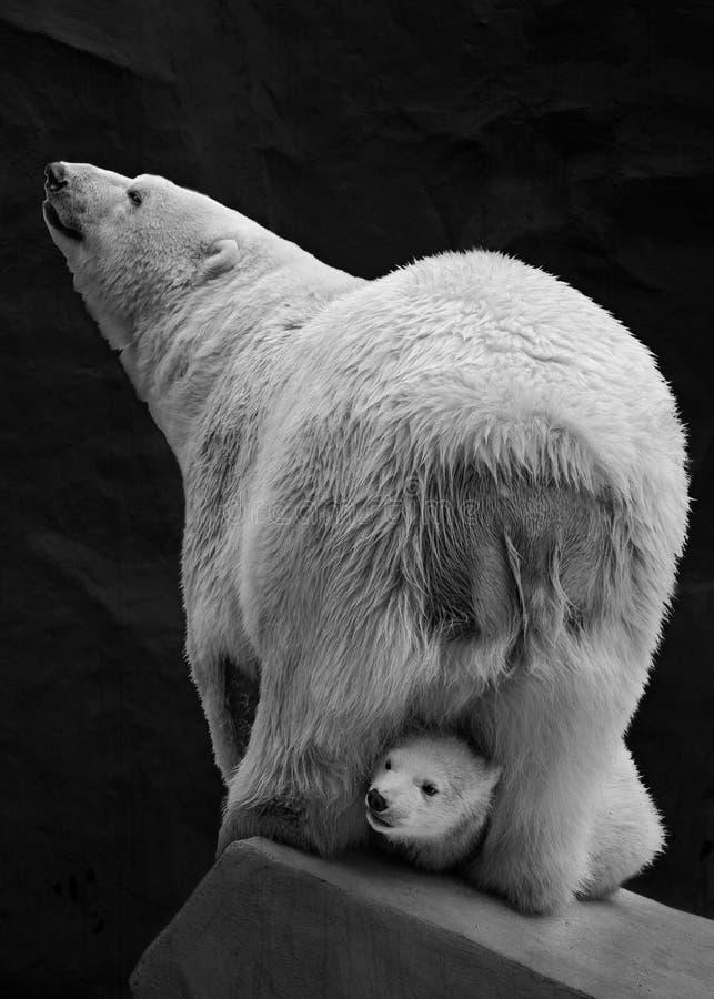 Игры плюшевого медвежонка с полярным медведем мамы стоковые фотографии rf