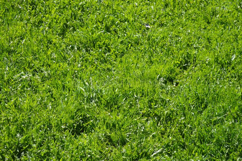 Идеальная яркая ая-зелен трава стоковые изображения