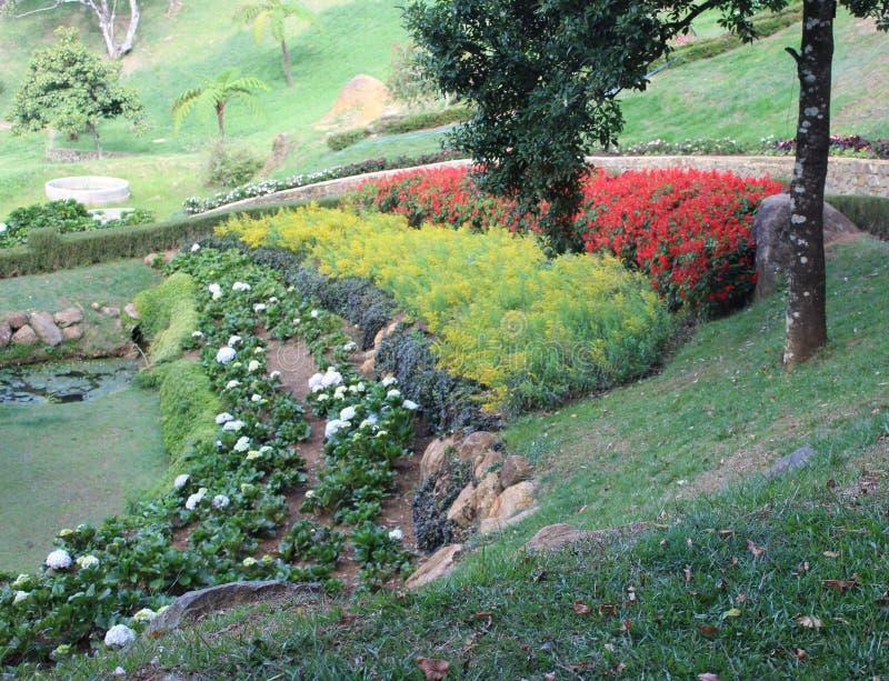 Идеи Hillside Landscape для домашнего сада стоковые изображения rf