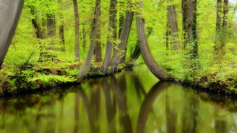 идет зеленый цвет рециркулирует стоковая фотография