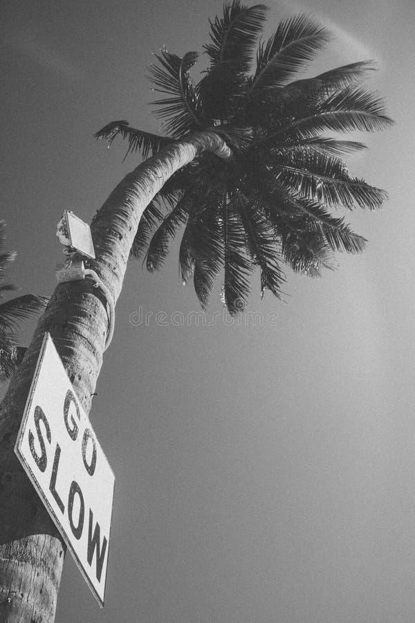 Идет медленный знак на пальме в чеканщике Белизе Caye стоковое изображение