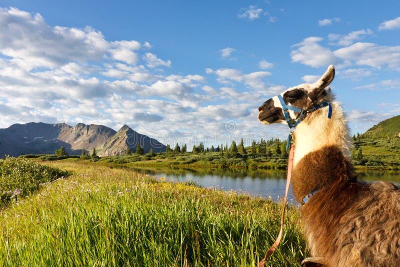 идилличная гора llama озера стоковая фотография