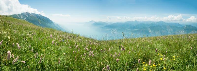 Идилличное baldo monte ландшафта горы с красивым розовым лугом wildflower knotgrass и взгляд к озеру garda стоковые изображения rf