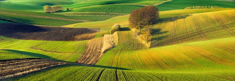 Идилличный взгляд, итальянские красивые поля ландшафта, зеленых и коричневых Тосканы стоковое фото rf