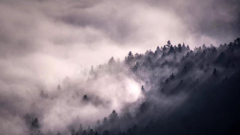 Идилличный ландшафт в Альпах с свежими зелеными лугами и зацветая цветками и снег-покрытыми верхними частями горы на заднем плане стоковое фото rf