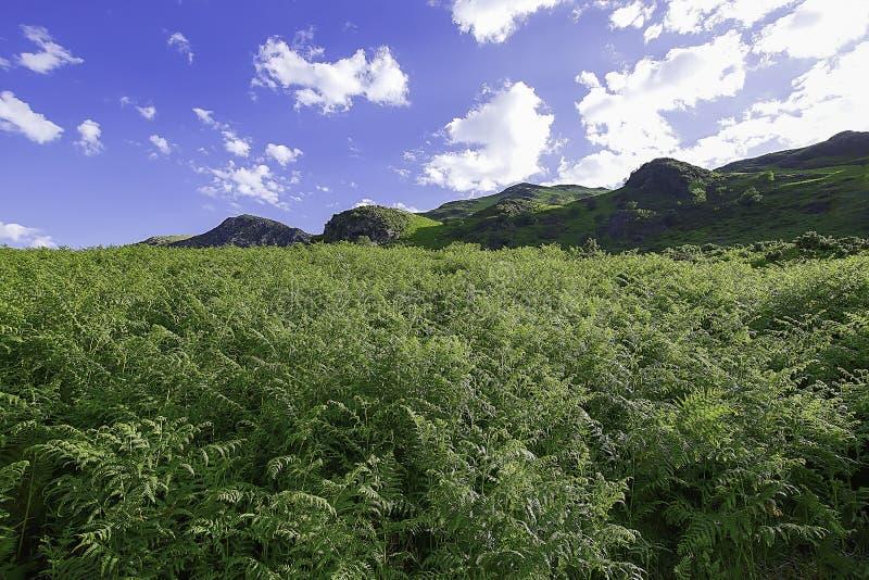 Идилличный ландшафт национального парка района озера, Cumbria, Великобритании стоковое изображение rf